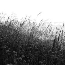 ... und ein wildes Feld.
